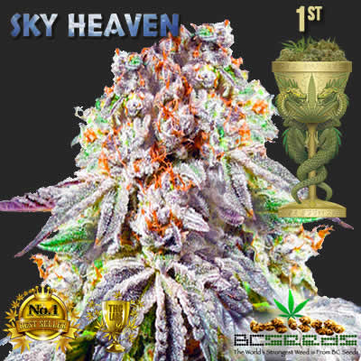2017 Dragon Cup Cannabis Award Sky Heaven